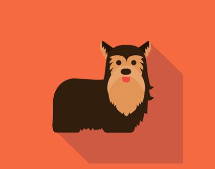 Дрессировка. Обучение собак